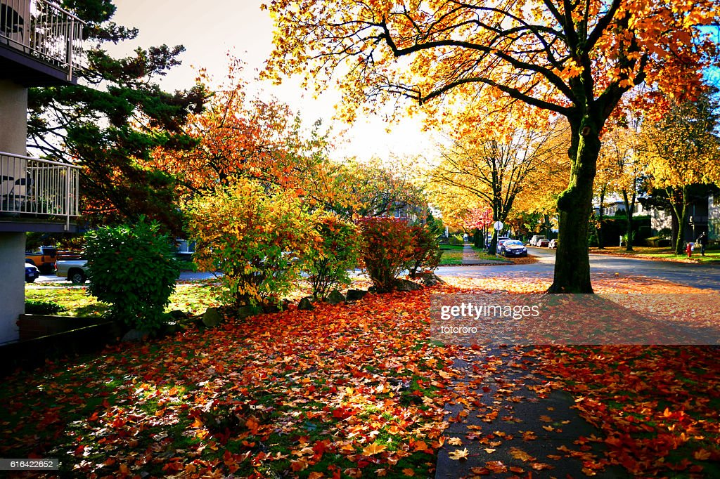 Streets in Autumn in Vancouver BC Canada : Stock Photo