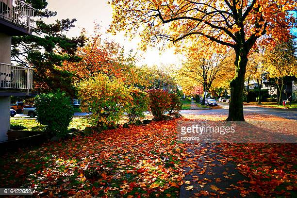 Streets in Autumn in Vancouver BC Canada