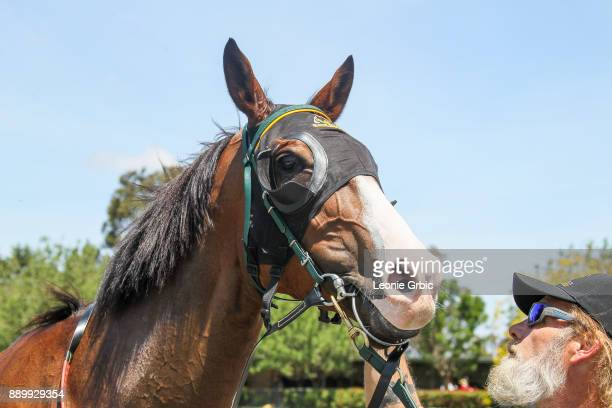 Streets of Avalon after winning the Edge associates Temp Fence Hire 3YO Maiden Plate at Bairnsdale Racecourse on December 11 2017 in Bairnsdale...