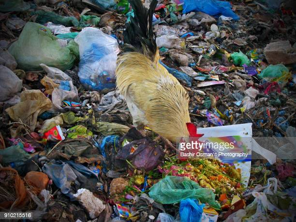 streets of karachi - food contamination stock photos and pictures