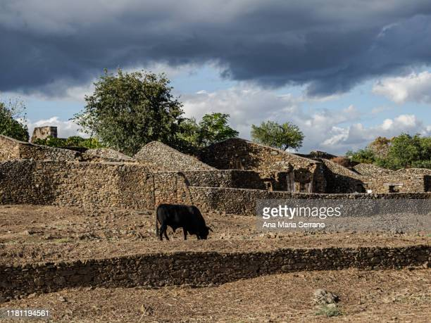 streets of the walled city or ghost town of granadilla, with reconstructed houses, abandoned houses and ruined houses and a black bull in a corral - caceres stock pictures, royalty-free photos & images