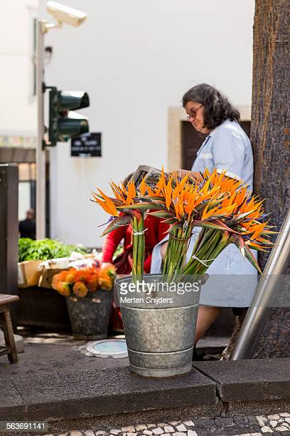 Strelitzia reginae flowers in bucket on street