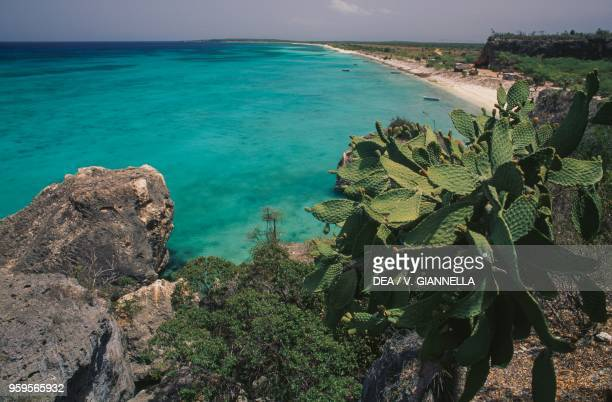 A stretch of coastline with a sandy beach and cacti in the foreground Dominican Republic