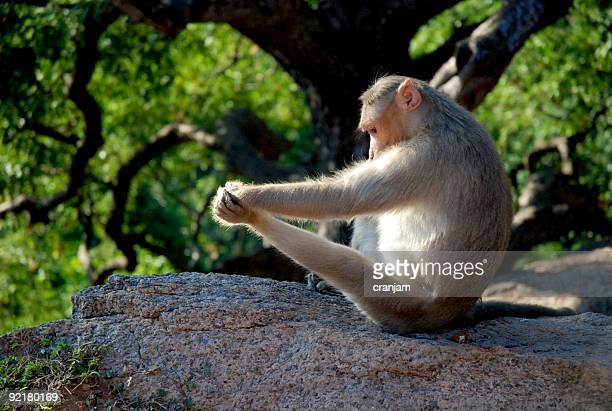 Stretching monkey