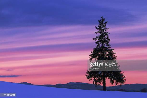 Striated sunset