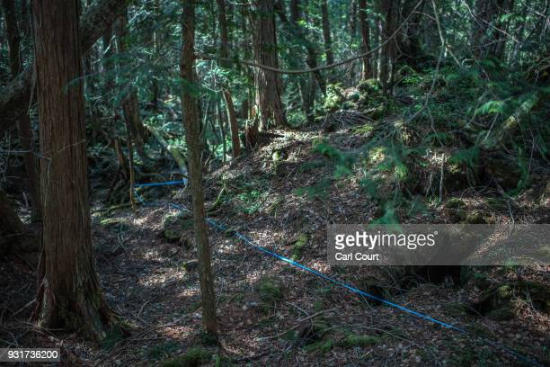 String leads from a pathway to an apparent suicide site in Aokigahara forest on March 13 2018 in Fujikawaguchiko Japan Aokigahara forest lies on the...