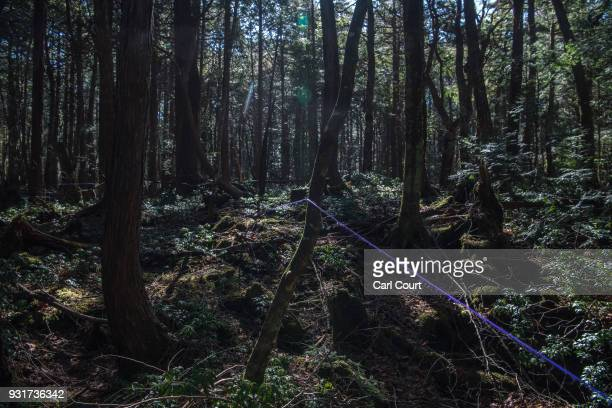 String leads from a pathway to the site of an apparent suicide in Aokigahara forest on March 14 2018 in Fujikawaguchiko Japan Aokigahara forest lies...