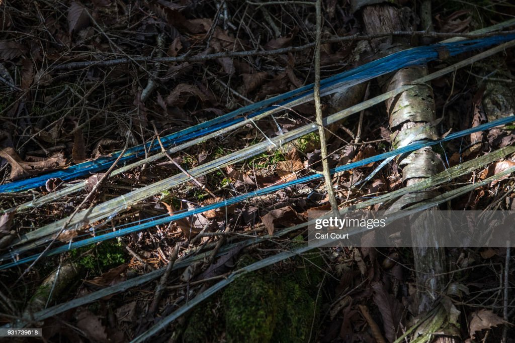 String leads from a pathway to the site of an apparent suicide in Aokigahara forest, on March 14, 2018 in Fujikawaguchiko, Japan. Aokigahara forest lies on the on the northwestern flank of Mount Fuji and in recent years has become known as one of the world's most prevalent suicide sites. The density of the forest is believed to be a contributing factor with people often tying string to trees to find their way back to a path in case they change their mind. In 2010, officials recorded more than 200 attempted suicides in the forest with attempts said to increase during the end of the Japanese fiscal year. In recent years, local officials have stopped publicising the numbers in an attempt to decrease Aokigahara's association with suicide.