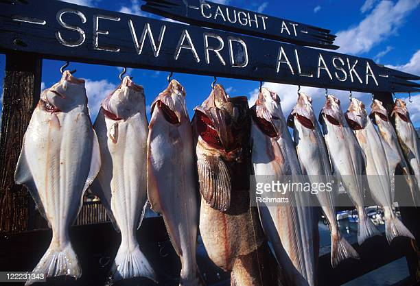 string of fresh fish hanging on a line in alaska - endopack stock pictures, royalty-free photos & images