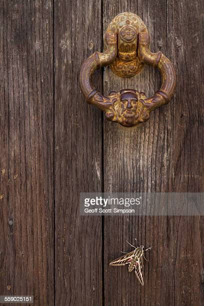 Striped Hawkmoth and Elaborate Door Knocker