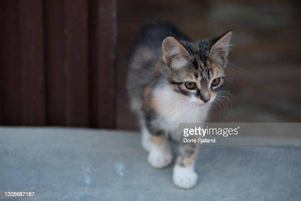 striped kitten coming towards the camera from a blurred, brown background - dorte fjalland imagens e fotografias de stock