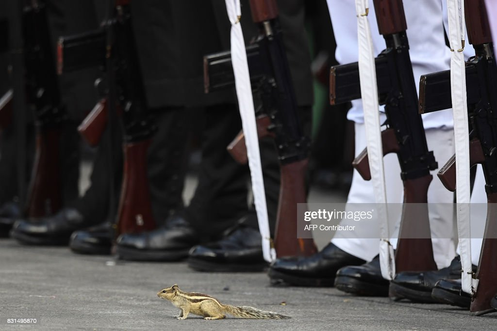 A striped squirrel is seen beside an Indian guard of honour    News