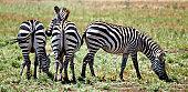 Stripes in Arrears