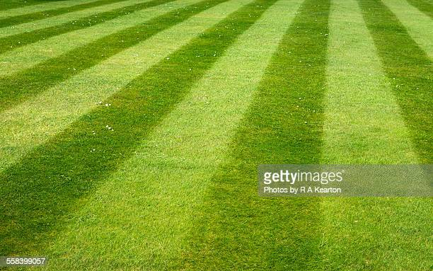 stripes on an english lawn - striped stock photos and pictures