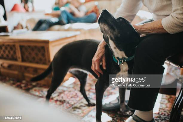 stroking dog - dog stock pictures, royalty-free photos & images