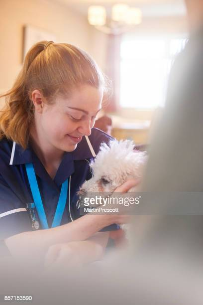 Caressant les patients petit chien