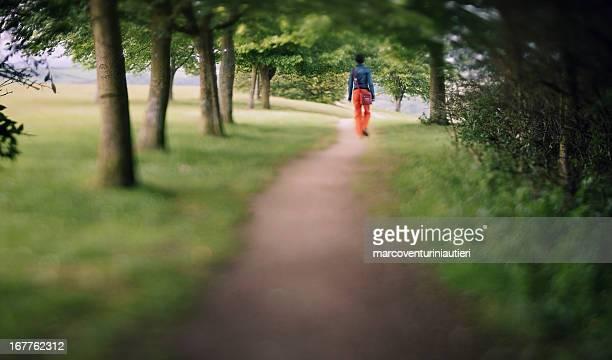 stroll in the woods - softfocus stockfoto's en -beelden