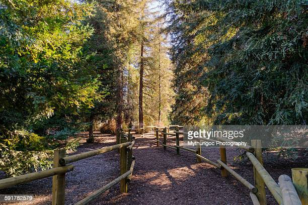 a stroll thru redwood grove - grove stock photos and pictures