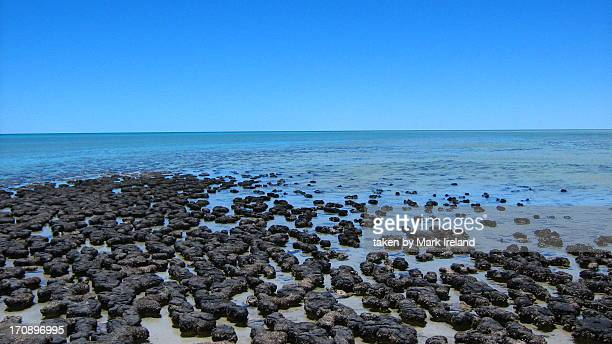 Stromatolites at Shark Bay