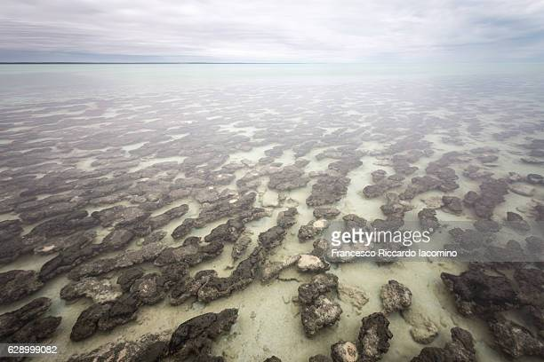 stromatolites in western australia - francesco riccardo iacomino australia foto e immagini stock