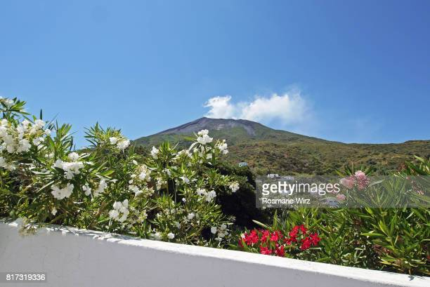 stromboli, aeolian islands, italy - flowering plant stock photos and pictures