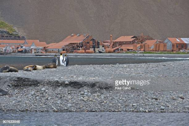 Stromness is a former whaling station on the northern coast of South Georgia Island in the South Atlantic It was the destination of Ernest...
