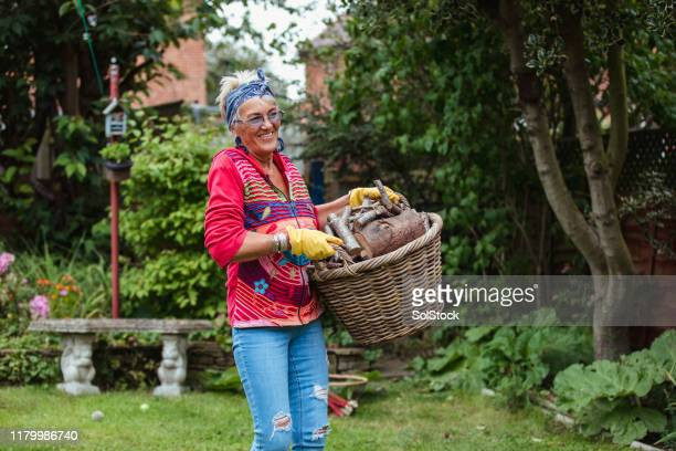 strong and independent senior woman - firewood stock pictures, royalty-free photos & images