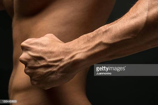 starke unterarm - muskel stock-fotos und bilder