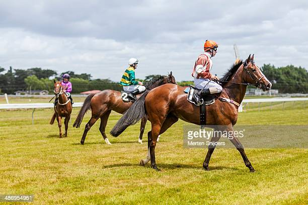 Strong looking horses with jockeys finish an oval race at the race track in Woodville, Manawatu-Wanganui.