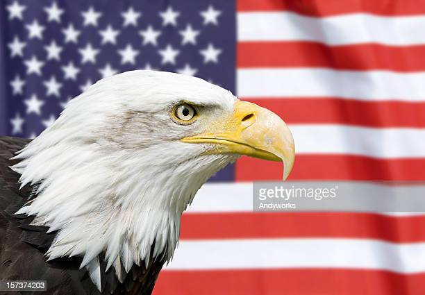 strong partnership - bald eagle with american flag stock pictures, royalty-free photos & images