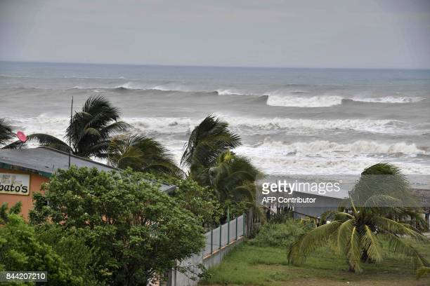 Strong winds hit palm trees before the arrival of hurricane Katia in Tecolutla Veracruz state Mexico on September 8 2017 Hurricane Katia strengthened...