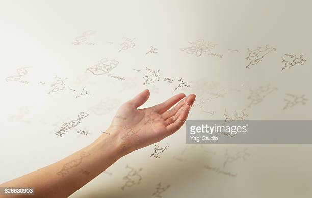 DNA structural formula and hand