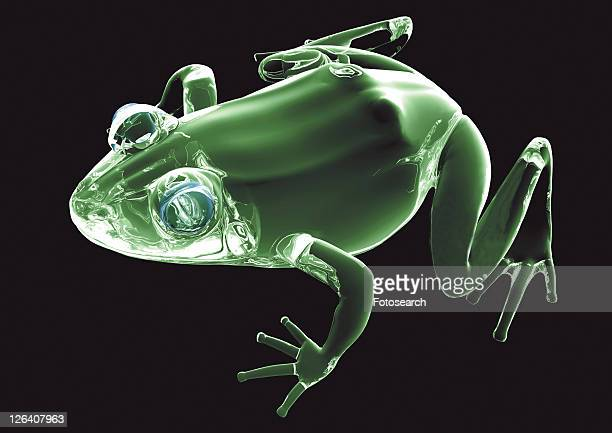 structure, green, translucent, turtle, frog