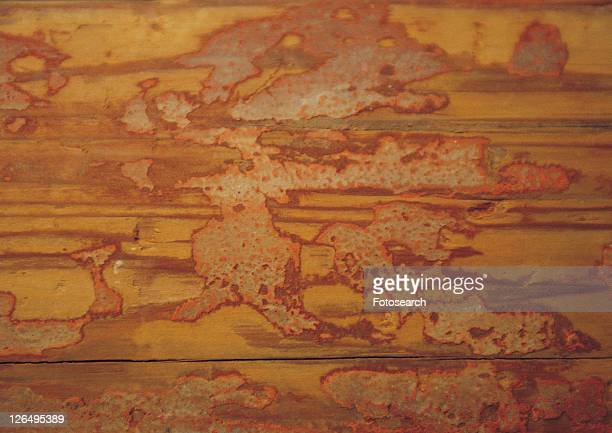 structure, material, iron, rust, pattern, metal - rust colored - fotografias e filmes do acervo