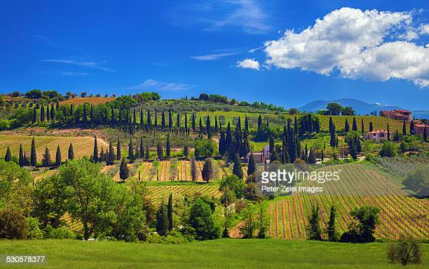 Structured landscape in Tuscany