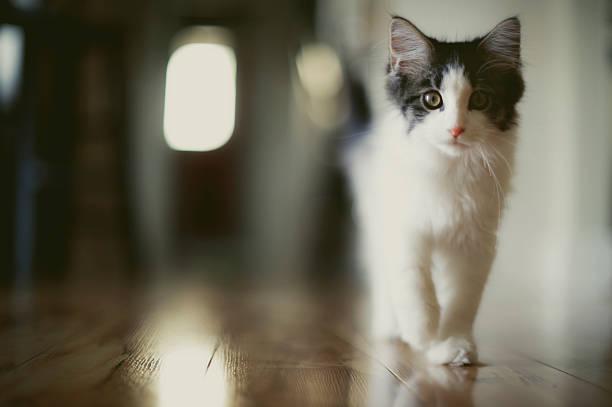 Strutting Kitten