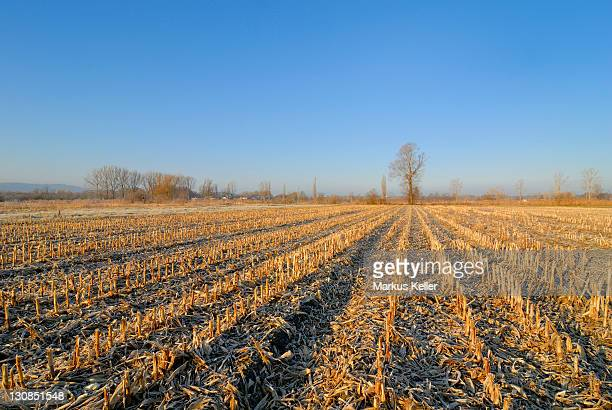 A stubble field, Baden-Wuerttemberg, Germany, Europe.