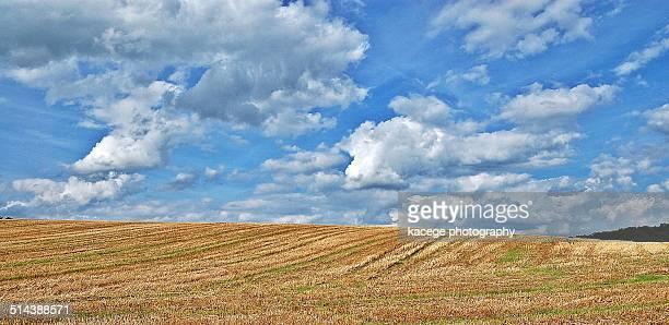 stubblefield in late summer - 休耕田 ストックフォトと画像