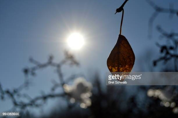 stubborn leaf Sunbathing