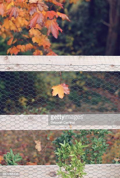 stuck on the fence - サットンコールドフィールド ストックフォトと画像