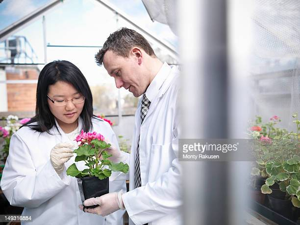 student and teacher observing flowers in school greenhouse laboratory - monty rakusen stock photos and pictures