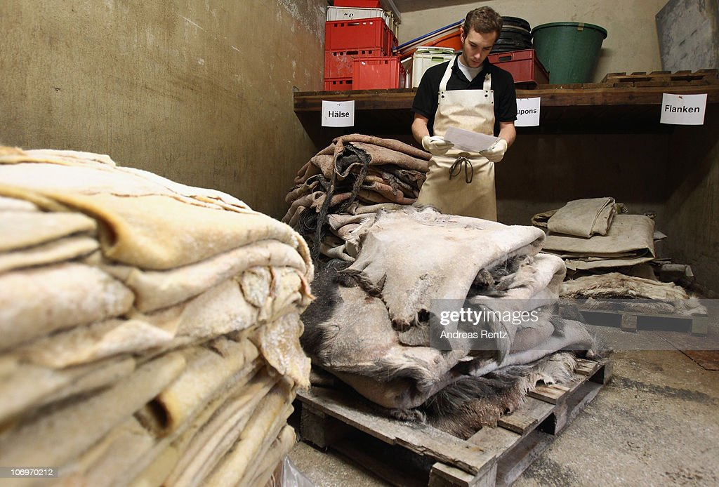 A student checks the rawhide stock in the storage at the LGR (Lederinstitut Gerberschule Reutlingen) tannery school on November 17, 2010 in Reutlingen, Germany. The LGR school, established in 1954, is among the few tannery schools left worldwide in a profession that some see as dying out. Demand for LGR training, however, is high, and 40% of LGR students come from abroad. The school has invested heavily into high-tech processes that allow precision engineering of leather products as leather products are rising annually by 10% worldwide. The LGR school is located in southwestern Germany in a region with a rich tradition in leather and textile manufacturing.