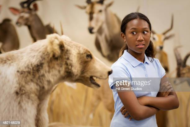 student examining stuffed bear in museum - tensed idaho stock photos and pictures