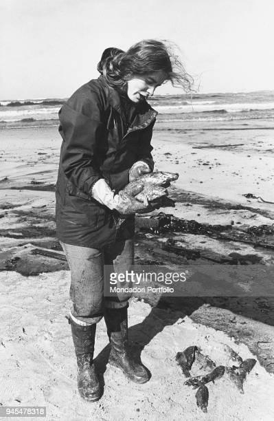 Student from the University of Brest analyzing a fish killed by the oil split into the sea by the Very Large Crude Carrier Amoco Cadiz. Portsail, 1978