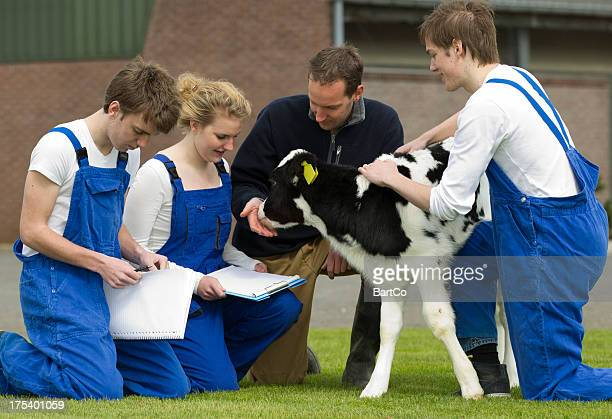 Student learn about cows from an experienced instructor.