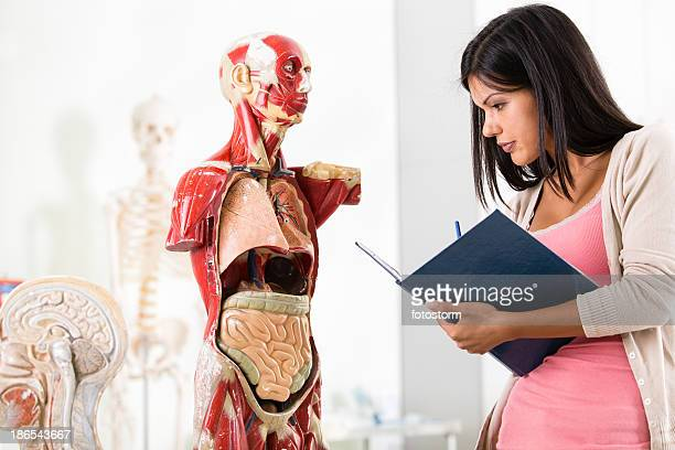 Student on anatomy class