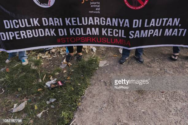 Student organizations and animal lover communities protested against the dolphin circus on January 16 2019 in Pekanbaru Indonesia They demanded...