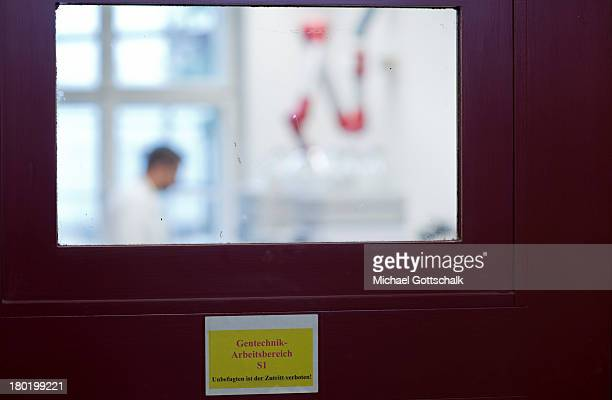 A student works in a genetic laboratory at the Institute of Biology at the Humboldt University of Berlin on September 04 2013 in Berlin Germany