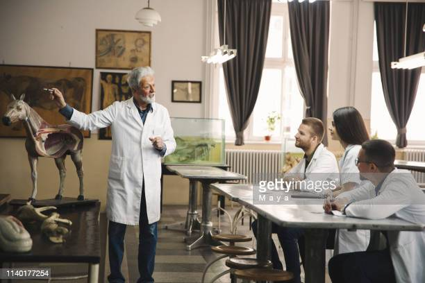 students discuss with professor. - anatomy stock pictures, royalty-free photos & images