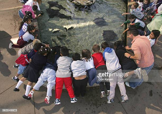 Students from Lord Baden Powell elementary School Anaheim Calif swarm over one the Shark Lagoon Touch Pools at the Long Beach Aquarium for a closer...